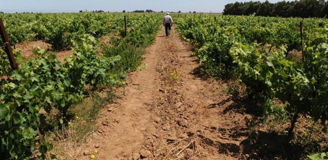 Agriculture : Des mesures salvatrices pour une campagne impactée