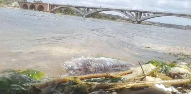 Azemmour : Le SOS de l'embouchure d'Oum Rbia !