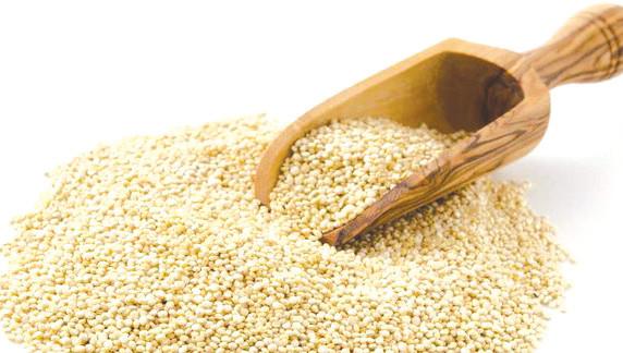 Rehamna : la culture alternative du quinoa