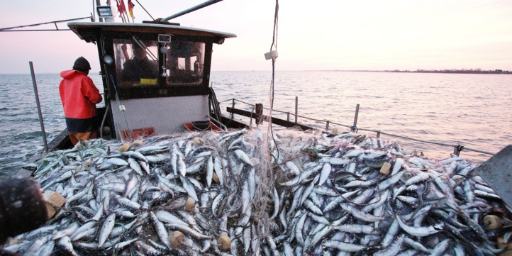 Covid-19 : Chute de 6,5% des activités de pêche à l'échelle mondiale