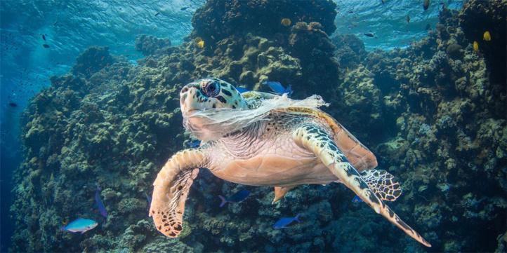 Covid-19 : Le tourisme doit lutter contre l'usage du plastique pendant et après la pandémie
