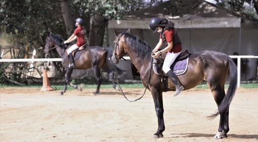 Sports équestres : Les chevaux reprennent du collier