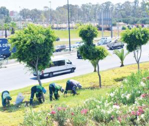 Casablanca : Une nouvelle vie pour les jardins de la métropole