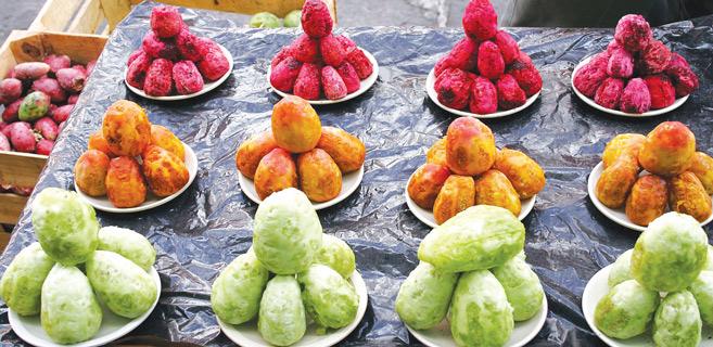 Doukkala / Figues de Barbarie : La Cochenille du cactus flambe les prix !