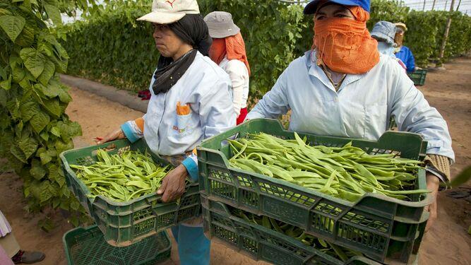 Plusieurs travailleuses marocaines dans une serre de la ville d'Agadir. ©️ Diario de Almeria