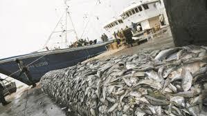 Région du Sud : Potentiel halieutique important pour les opérateurs économiques français