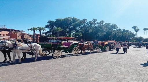 Marrakech : Balade en calèches pour relancer le tourisme