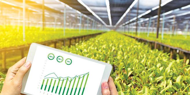 Microsoft : La numérisation de l'Agriculture au service de la sécurité alimentaire africaine