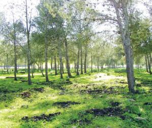 Casablanca : Éclaircissements relatifs aux travaux à la forêt de Bouskoura