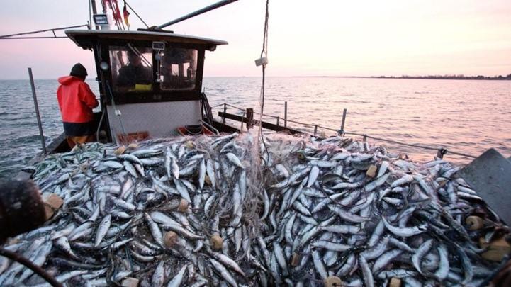 Produits de la mer : Hausse des exportations en septembre