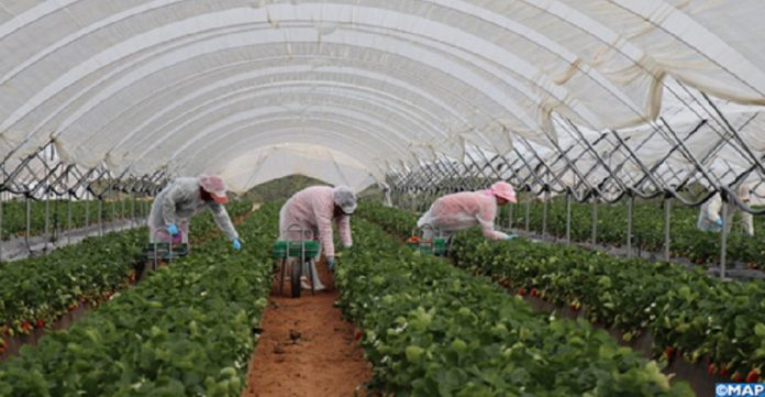 Secteur agricole : Les opérateurs déçus du PLF 2021