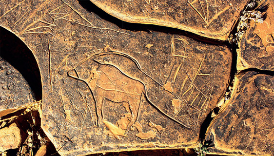 Antilope (Oryx), période des chasseurs (Site Tamdayresst, Province d'Assa Zag).