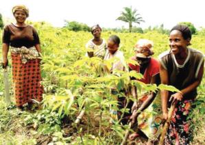 Campagne agricole en Afrique de l'Ouest : De meilleures récoltes après les fortes précipitations