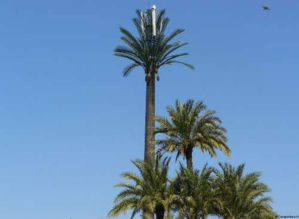 Un livre sur les palmiers de Marrakech