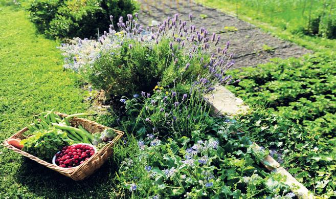 Pesticides : et si l'agriculture bio était la solution ?