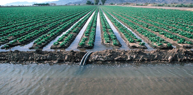 Province d'Essaouira : Campagne agricole dans de «très bonnes conditions»