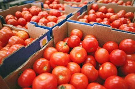 Guerre commerciale : La tomate marocaine attaquée sur le marché espagnol