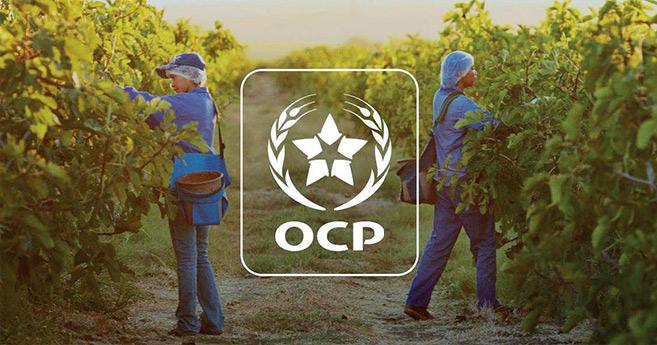 Coopération Maroc-Nigeria : l'OCP en première ligne pour le développement agricole