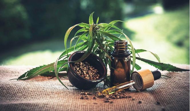 Médecine, cuisine, cosmétiques : Cannabis, l'or vert du Maroc à multiples usages