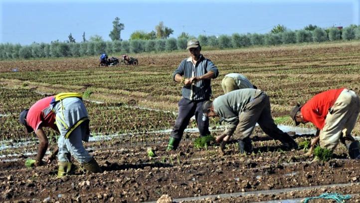 AMO : vers l'inclusion de 1,6 million agriculteurs et leurs familles