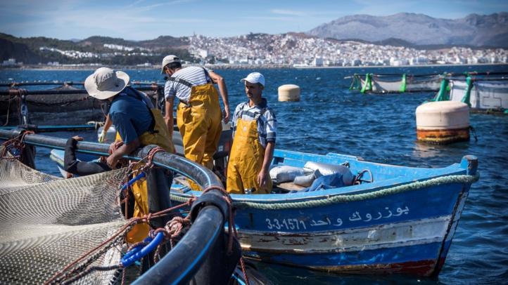 Pêche: Un début d'année marqué par la hausse de la valeur des produits