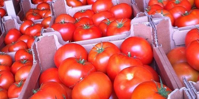 Le Maroc troisième fournisseur de tomates pour le Royaume-Uni
