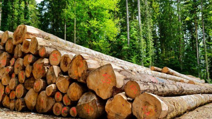 Filière du bois : Un secteur à fort potentiel, mal exploité au Maroc