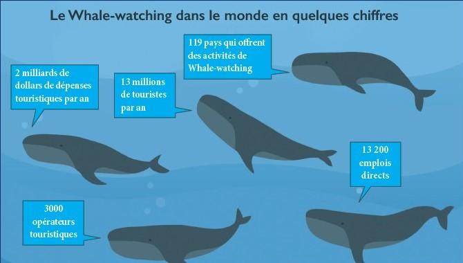 Pescatourisme et Whale-watching : Deux filières de l'économie bleue à développer d'urgence