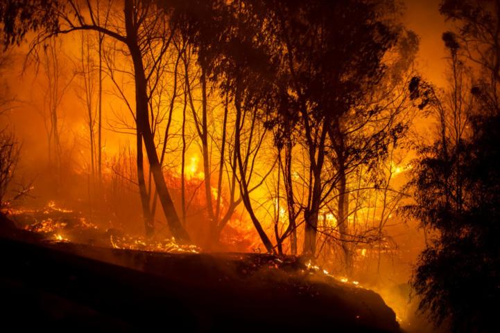 Été caniculaire : Une cinquantaine d'incendies ravagent le nord de l'Algérie