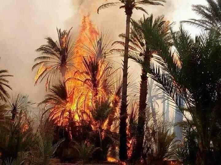 Zagoura : Un incendie dévore les oasis de la région