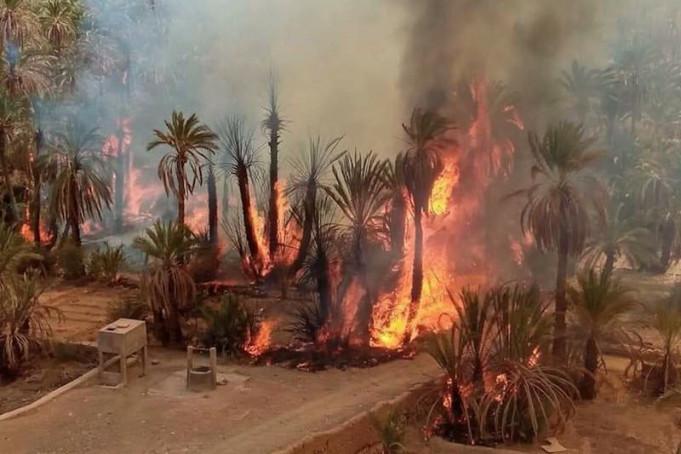 Désastre climatique : Un été de catastrophes dans les forêts et oasis