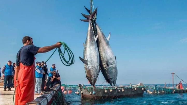 Pêche : La valeur des produits commercialisés augmente de 30%
