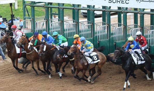 Le must des chevaux de courses  lors de la 5ème édition du meeting international du Maroc