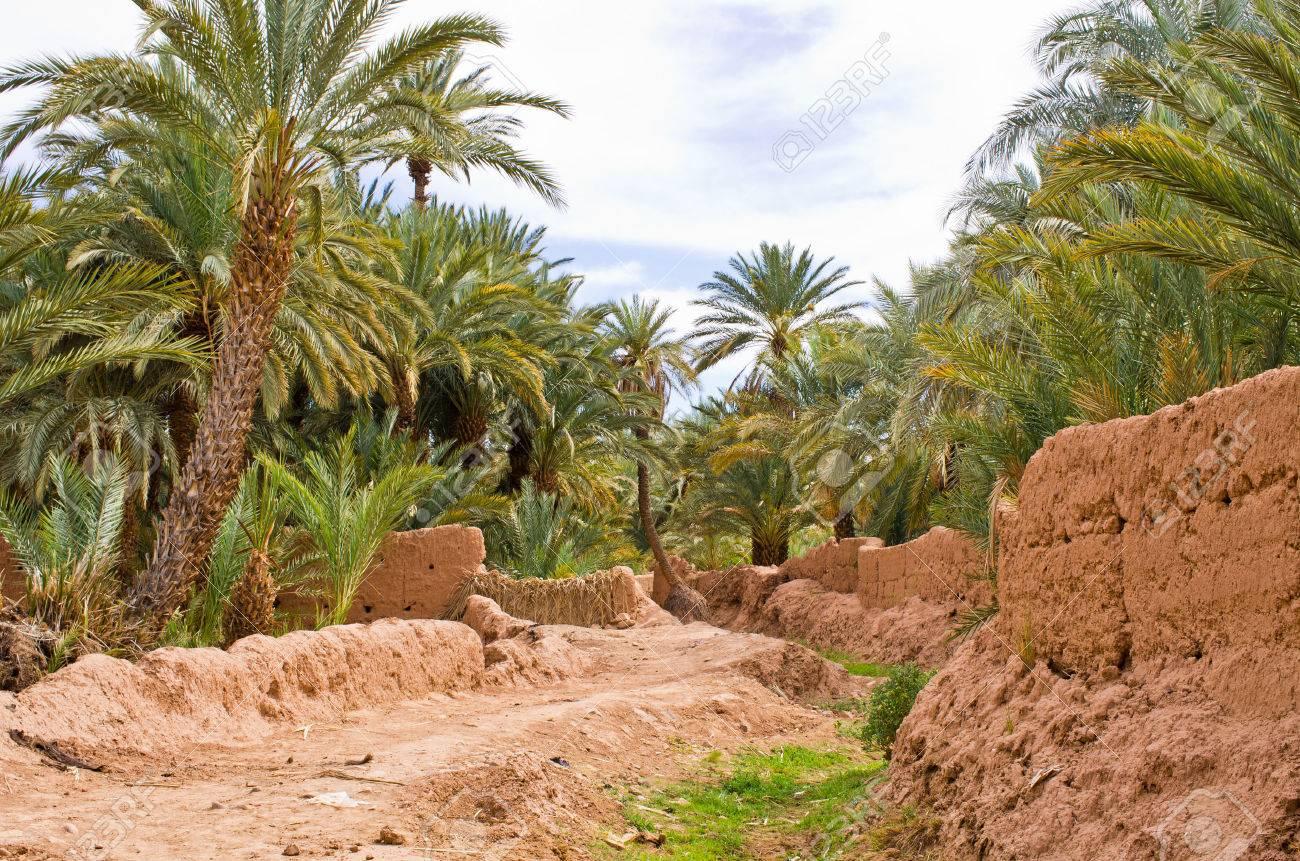 Le tourisme, levier de sauvegarde des oasis