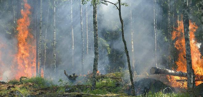 Sécheresse : départ précoce de la saison des feux de forêts