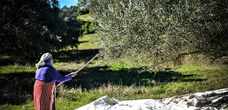 Le secteur de l'huile d'olive immunisé contre le coronavirus