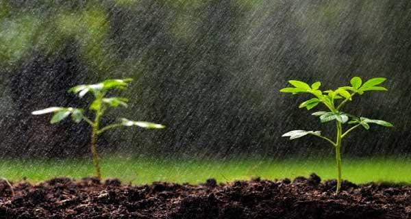 Impact positif des dernières pluies
