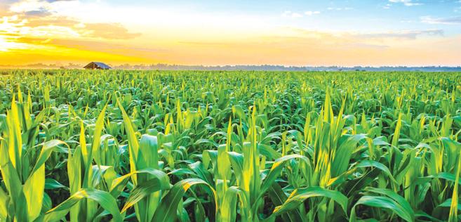 Campagne agricole plutôt satisfaisante