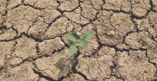 Le Maroc guetté par une deuxième année de sécheresse
