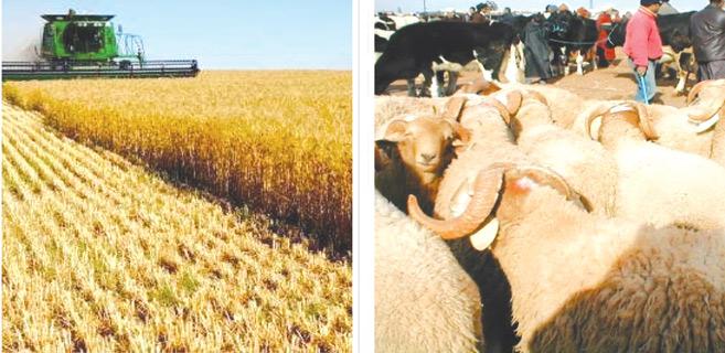 El Jadida : Plaidoyer en faveur de l'agriculture et l'élevage