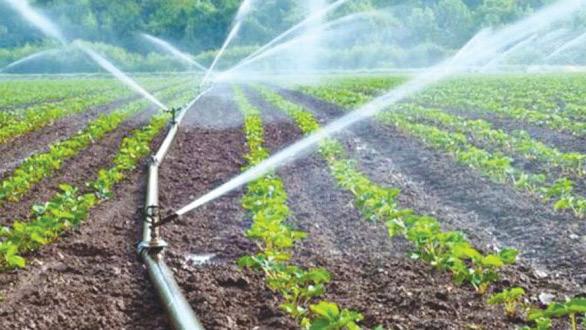 Marrakech-Saf : L'agriculture, secteur hautement «réactif» et «résilient»