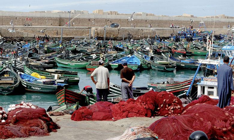 """Safi : Reprise de la pêche de poulpe…malgré le """"lockdown"""""""