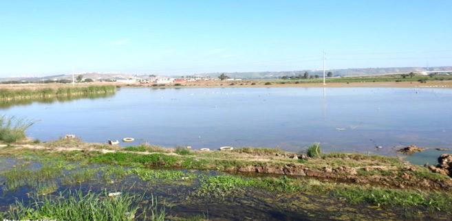 Environnement : Dernières tentatives pour sauvegarder l'unique zone humide de Rabat
