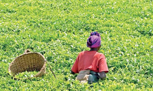 10ème Forum sur la révolution verte en Afrique : RDV en septembre par visioconférence à Kigali