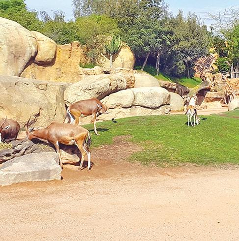 Casablanca : La réhabilitation du zoo de Aïn Sebaâ est relancée