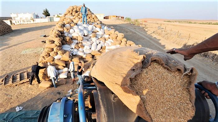 Campagne agricole 2020-2021 : Le Maroc serait le 9ème plus grand importateur de blé au monde