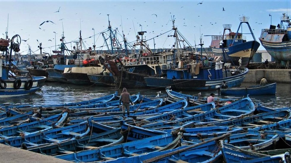Vaste opération de désinfection du port d'Essaouira