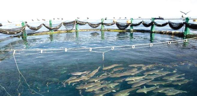 Dakhla-Oued Eddahab : L'aquaculture, véritable levier de développement