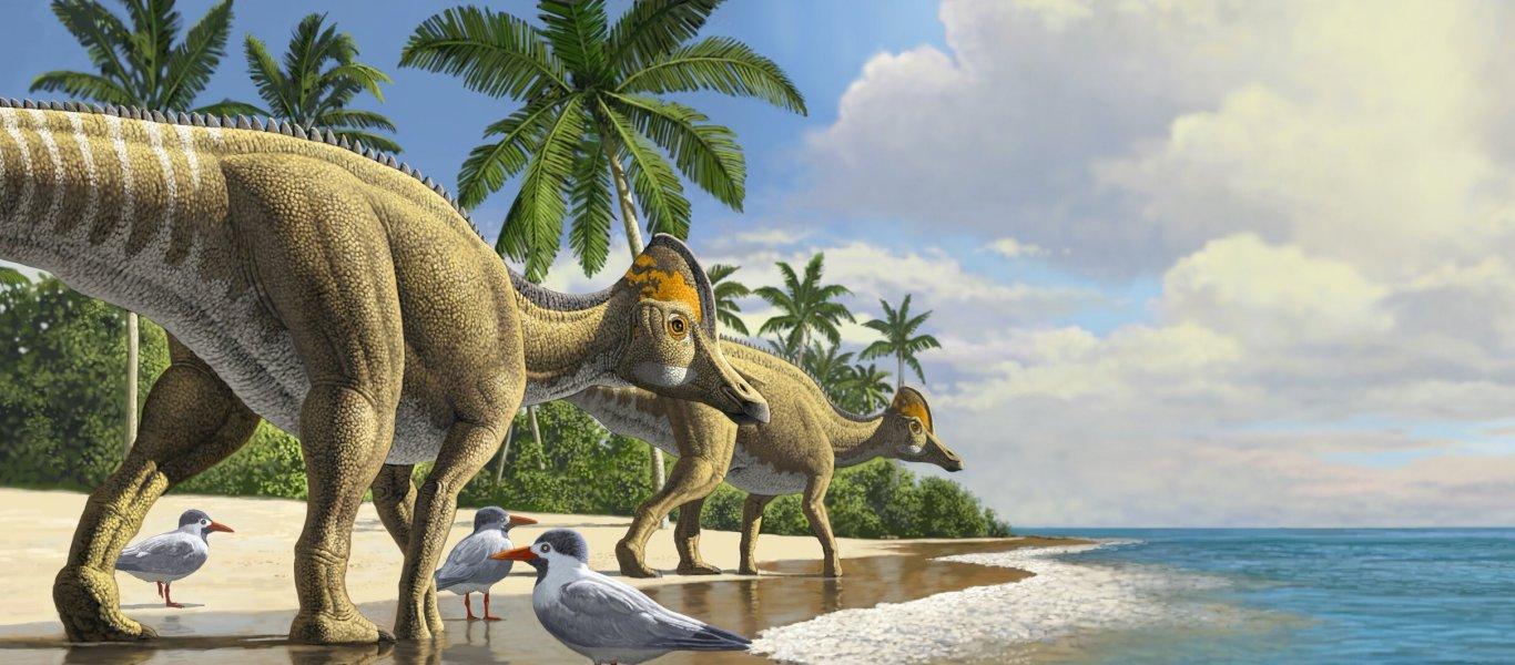Découverte d'un dinosaure américain transfuge au Maroc