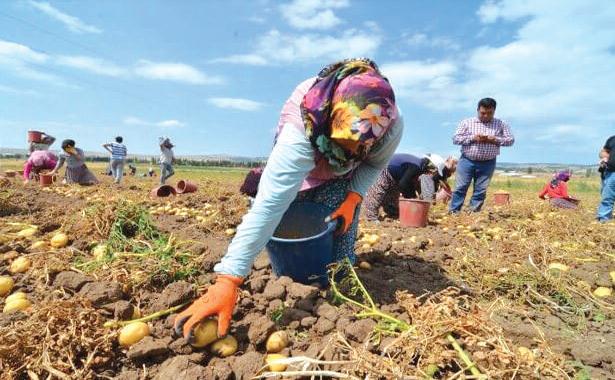 Khénifra : Aspiration à valoriser les produits agricoles de qualité
